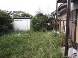 お庭掃除前、草が生い茂っている