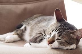 ペットと共に快適に暮らすリフォームのポイント