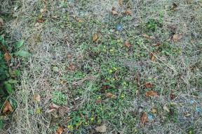 雑草との向き合い方