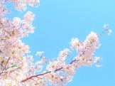 春と言えば桜、桜と言えば花見